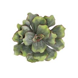 Crassula da appendere colore verde